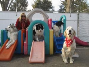 Doggie-Daycare-300x225