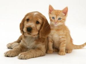 Puppy And Kitten 300x225