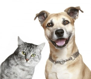 cat-and-dog-300x260