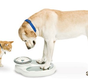 dog-and-cat-weigh-041613-290x270