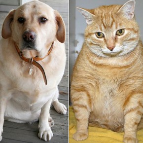 dog-cat-fat-041513-290x290