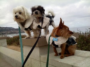 dogs-in-coats-300x225