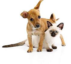 puppy-kitten2