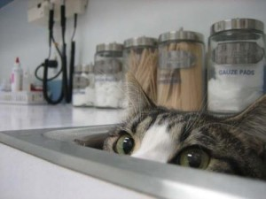 cat-in-sink