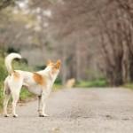lost-dog_2
