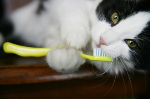 cat toothbrush