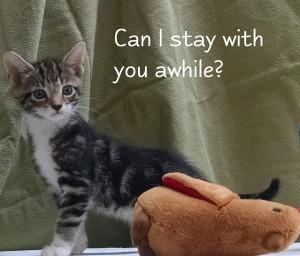 kitten stay