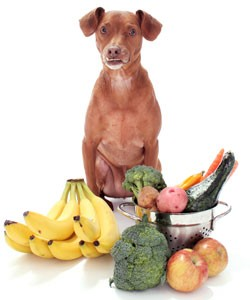 healthy immune system in pets