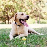 protect your dog from lyme disease