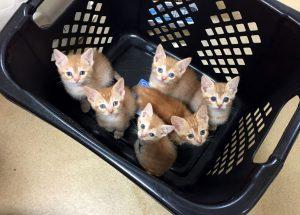 cat population
