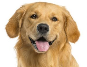 restoring good gut flora in dogs